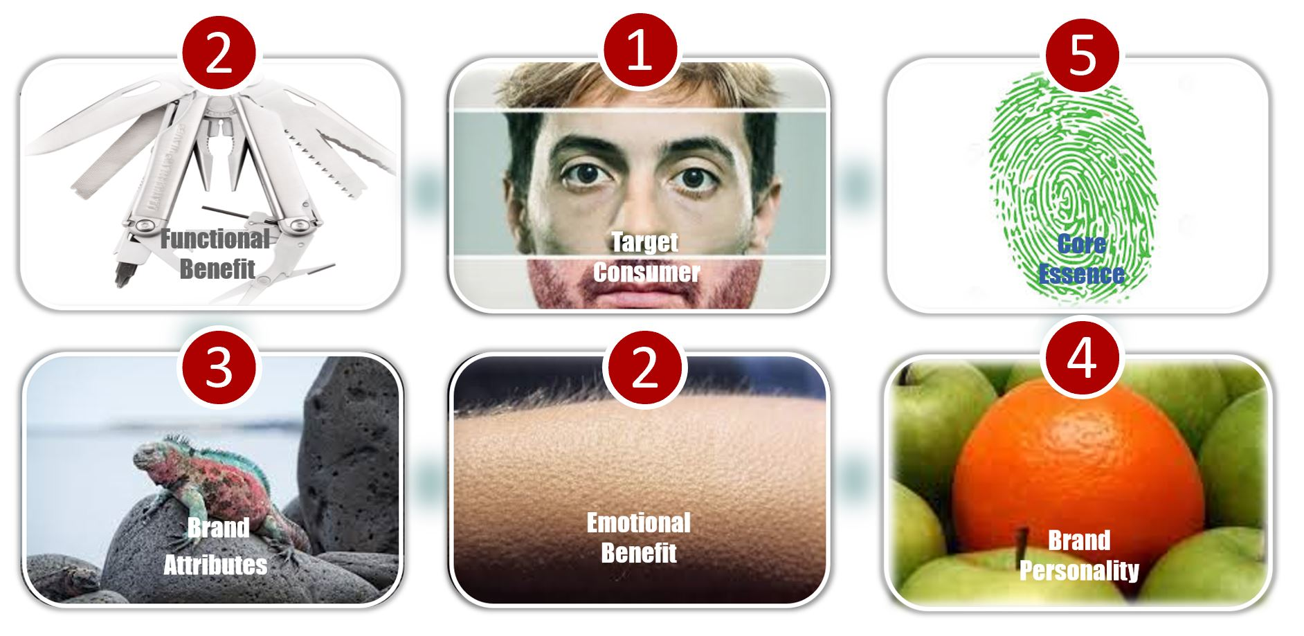 the archetypal branding process broken down into 6 phases, each symbolized by an image: target customer with a human face; functional benefits with utility knife; emotional benefit with bristly hair ; brand attributes with multicolored chameleon; brand personality with orange among apples; core essence with a thumbprint